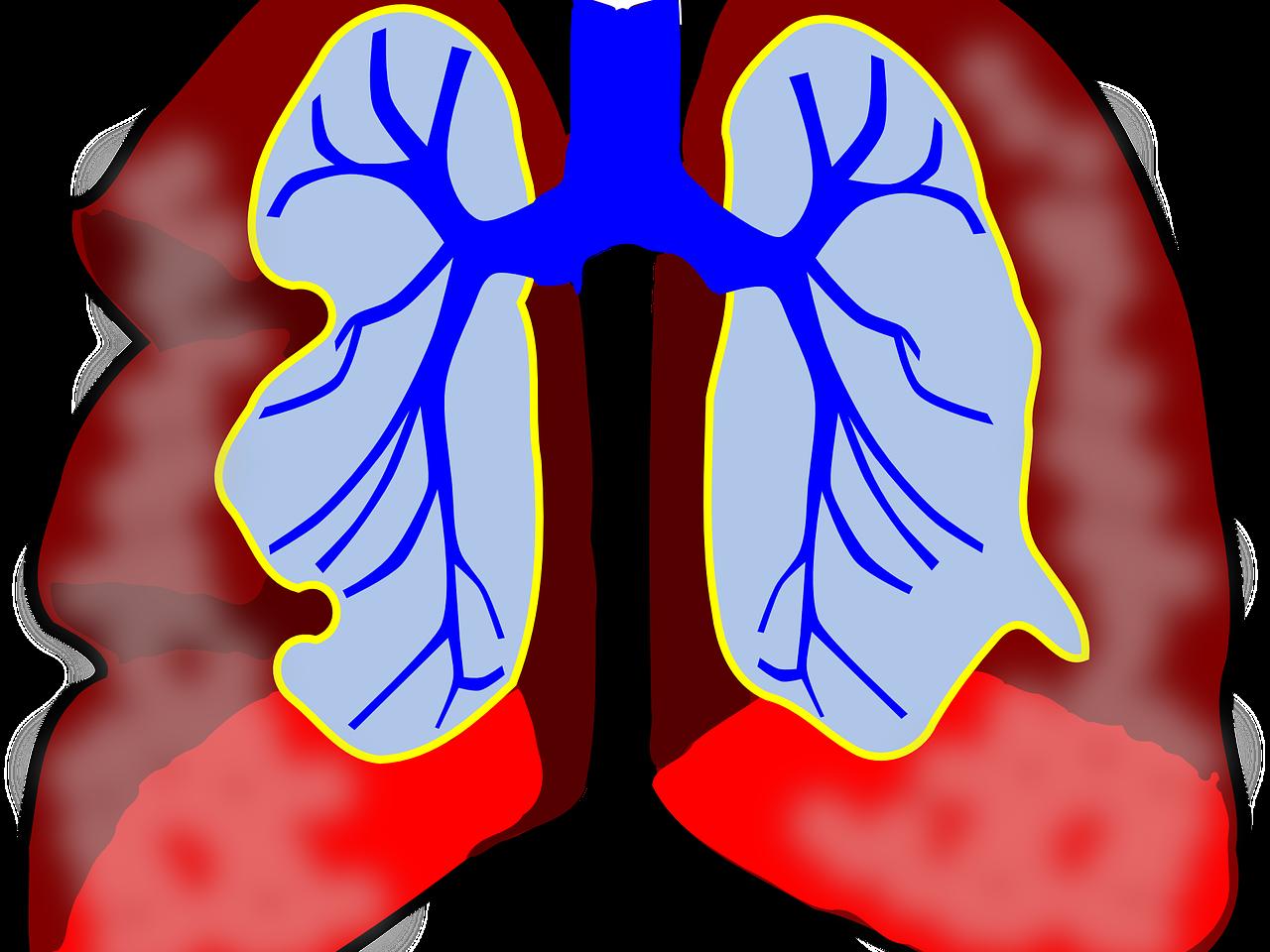 IGCSE PE (spec 2018) Respiratory System Bundle 2.1/2/3