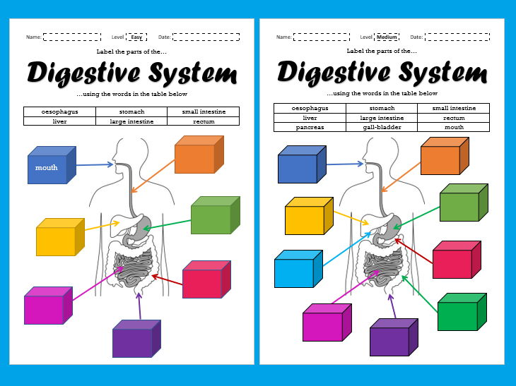 Label the Parts of the Digestive System - Differentiated [Suitable for Remote Learning]