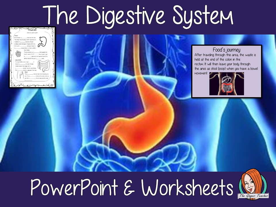 The Digestive System Science Lesson