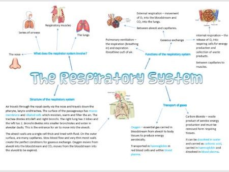 Respiratory System Mind Map AS PE OCR