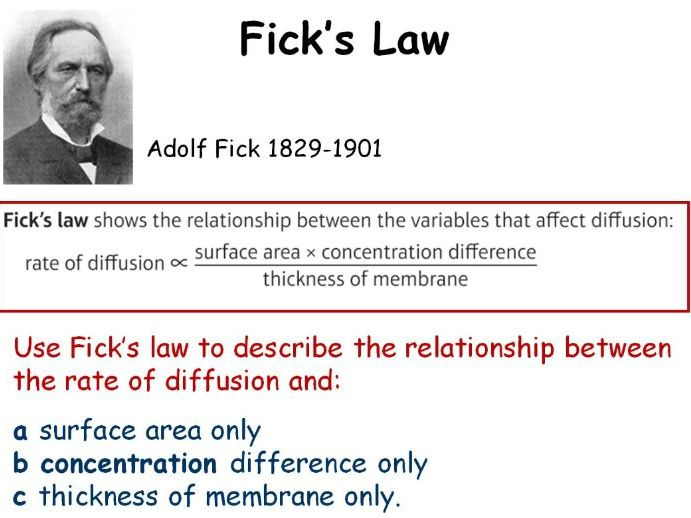 GCSE Biology Factors Affecting Diffusion (Fick's Law) Lesson Powerpoint (Edexcel 9-1 SB8b) TRIPLE