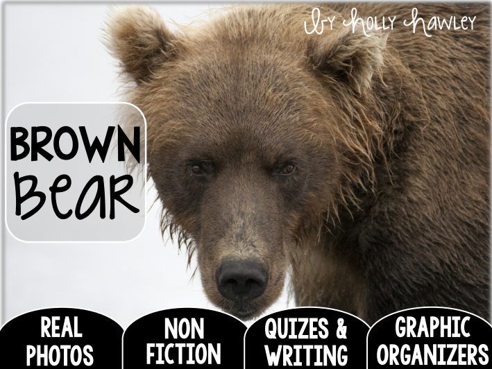 Brown Bear-A Research Project-US and UK Version COMBO