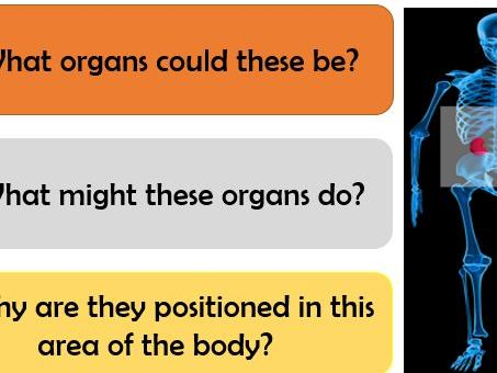Structure and Function of Kidneys. Assessment Opportunities. Differentiation. Model Answers