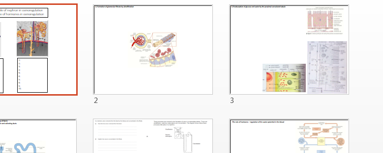 Osmoregulation, nephron, ADH