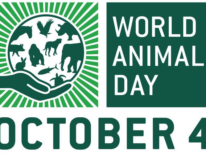 World Animal Day Powerpoint
