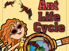 STEM - Be an Ant Detective - Life Cycle, Biomimicry and Inspiration for Ideas