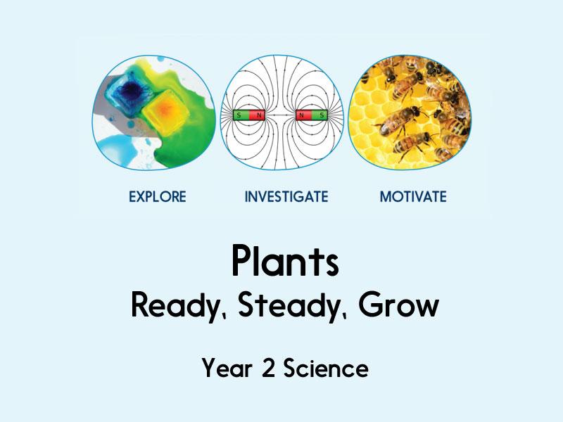 Plants Ready Steady Grow Year 2 By Hamiltontrust Teaching