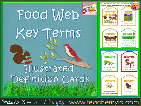Food Chains and Food Webs - definition cards