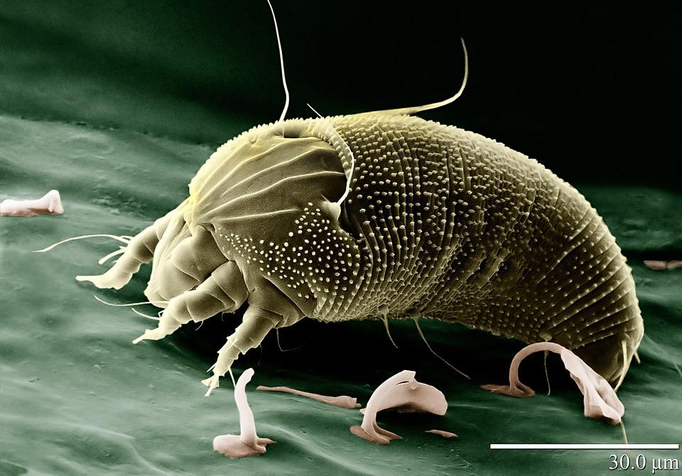 CB1ai: Microscope technology
