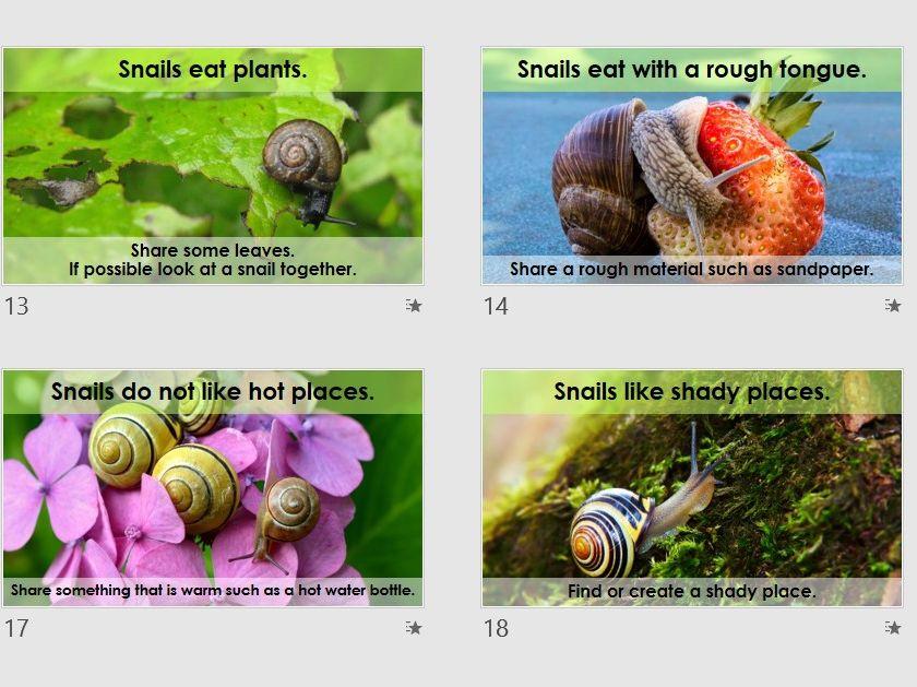 Snails Sensory Science
