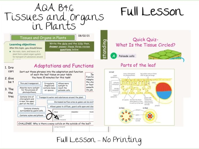 B4.6 Tissues and Organs in Plants AQA 9-1 Lesson- No Prep