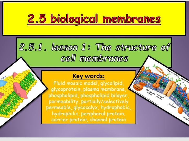 OUTSTANDING  2.5 biological membranes lessons for the new OCR  A-level biology A specification