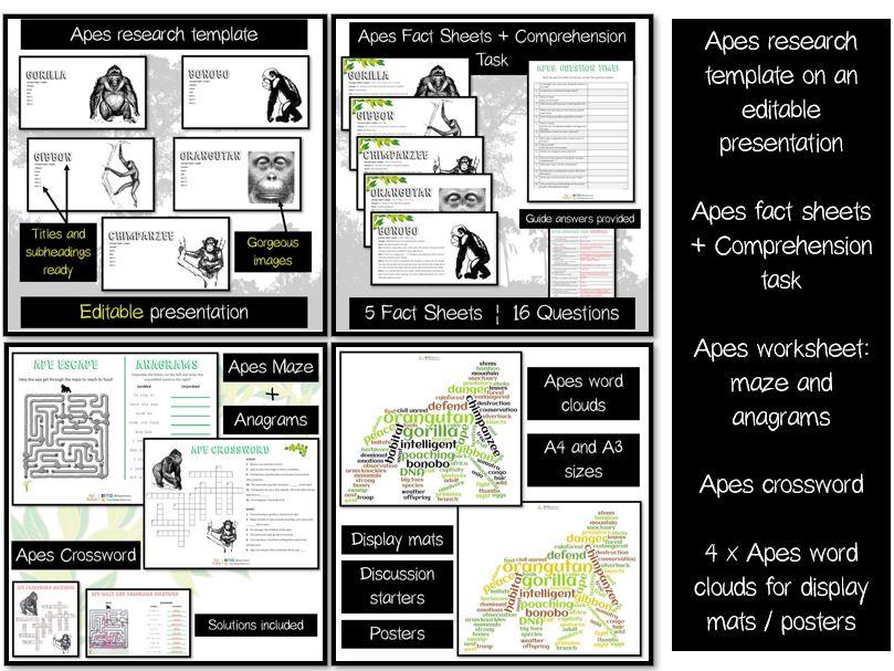 Apes editable presentation, factsheets, comprehension, 3 puzzles + word clouds
