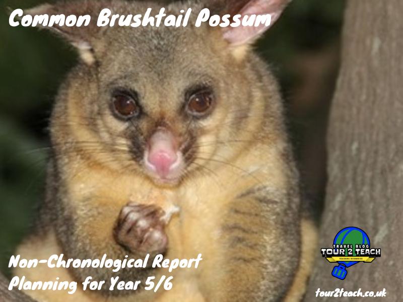Common Brushtail Possum: Non-Chronological Report Planning for Year 5/6