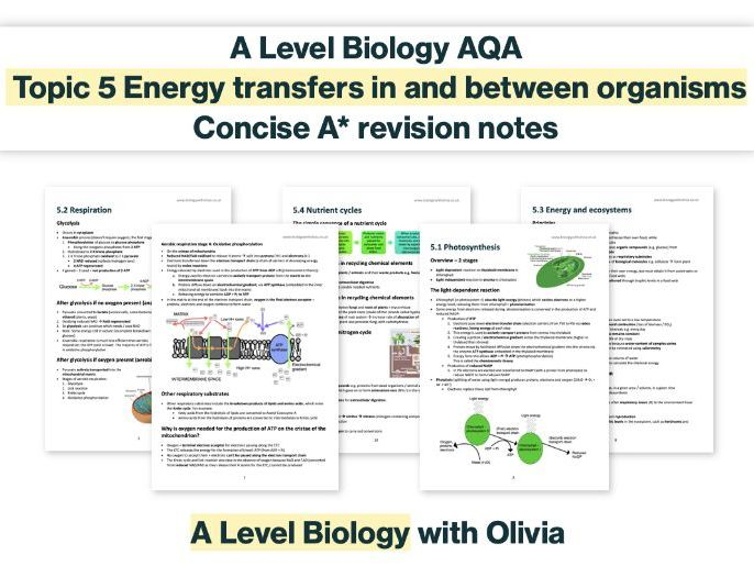 CONCISE A* photosynthesis, respiration, energy & nutrient cycles notes | AQA A Level Biology