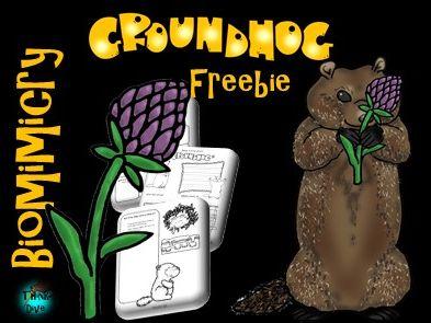 Groundhog Freebie - STEAM, Biomimicry - US