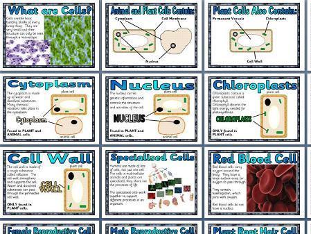Cells Display Pack