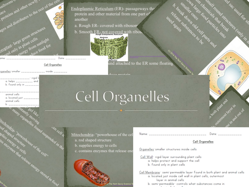 Cell Organelle notes and powerpoint