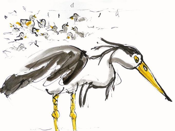 Heron Jessy standing in the water, waiting for fish to catch - illustration by artist Wendy Tjalma