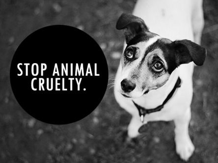 Animal Cruelty Research Article (Source for Argumentative/Persuasive Essay) Graphic Content*