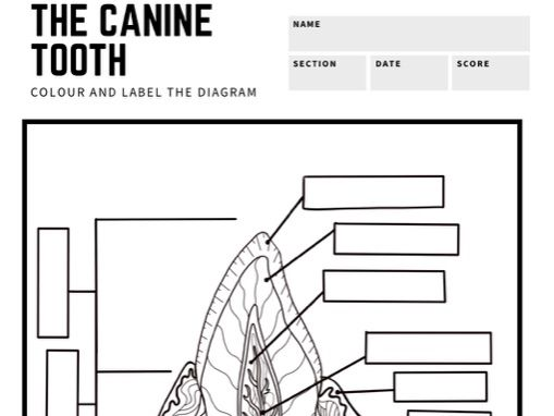 BTEC Animal Care: Canine Tooth Diagram to Label
