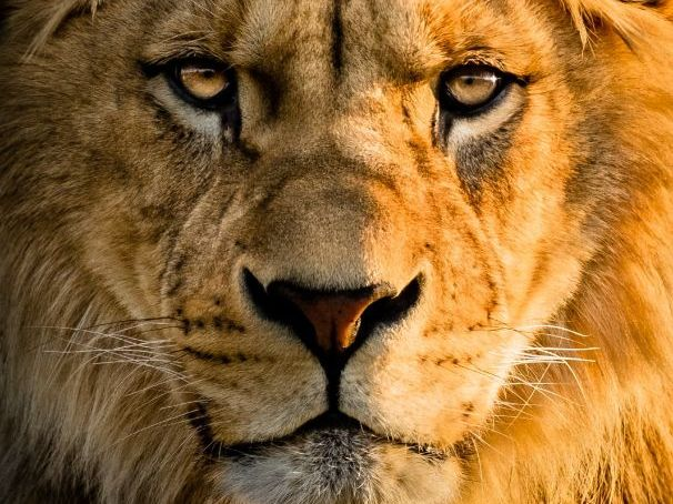 Joanna Preston 'The Pride of Lions' - Poem Analysis