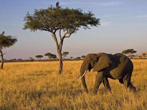 Savanna Ecosystem