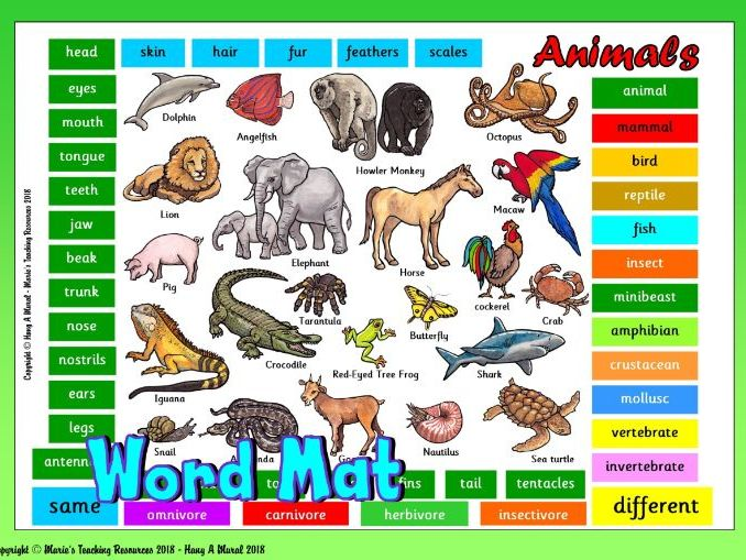 Animals - Classification - Different Groups Word Mat