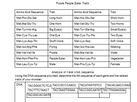 Transcription and Translation from DNA to coded traits worksheet