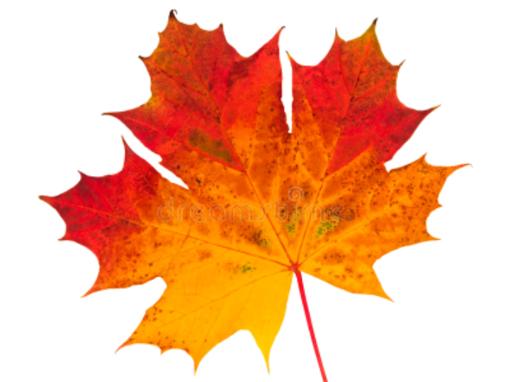 Autumn and Harvest Poetry Resources