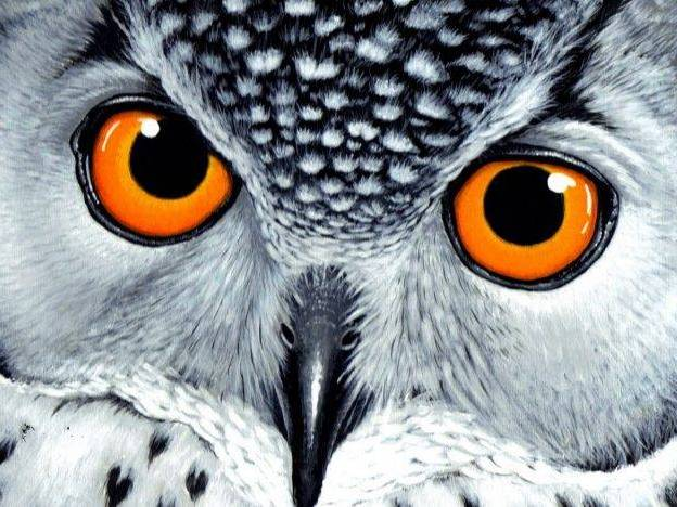 4 dance lessons The Owl Who Was Afraid of the Dark