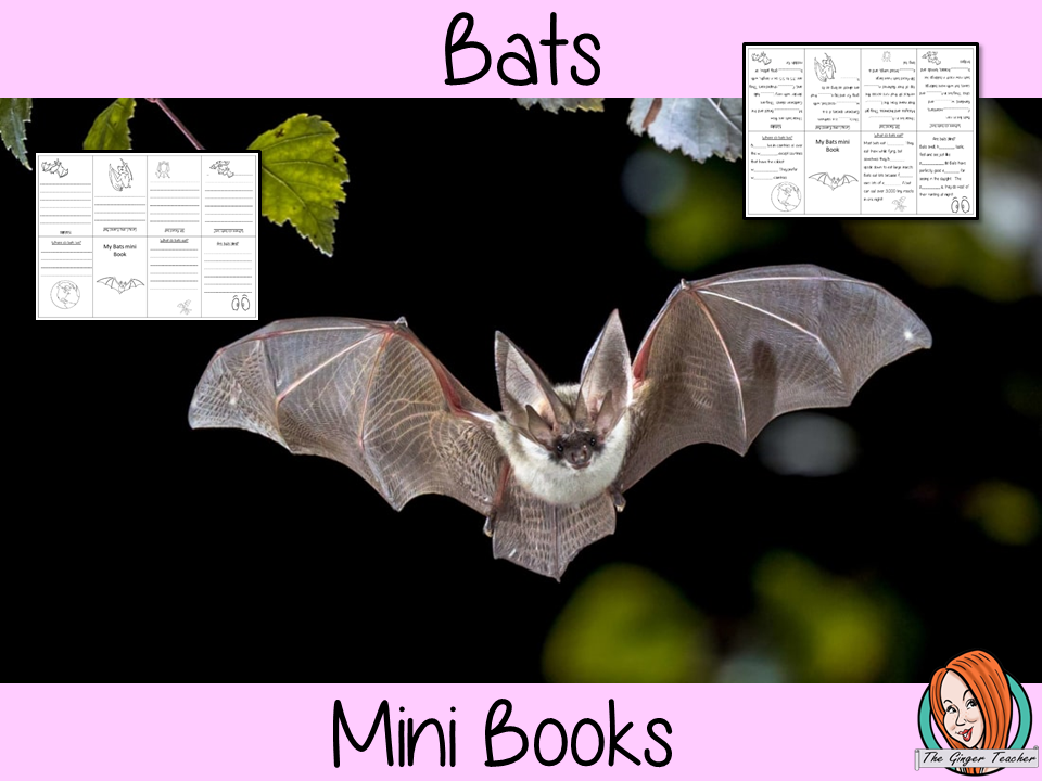 Learn About Bats Mini Book