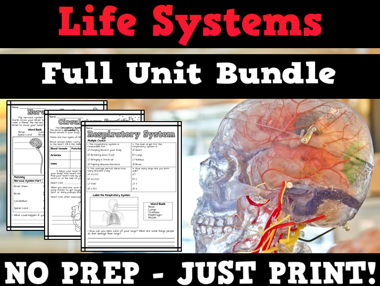 Human Body Systems Worksheets