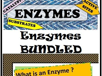 Enzymes - Introduction and how it works (BUNDLED)