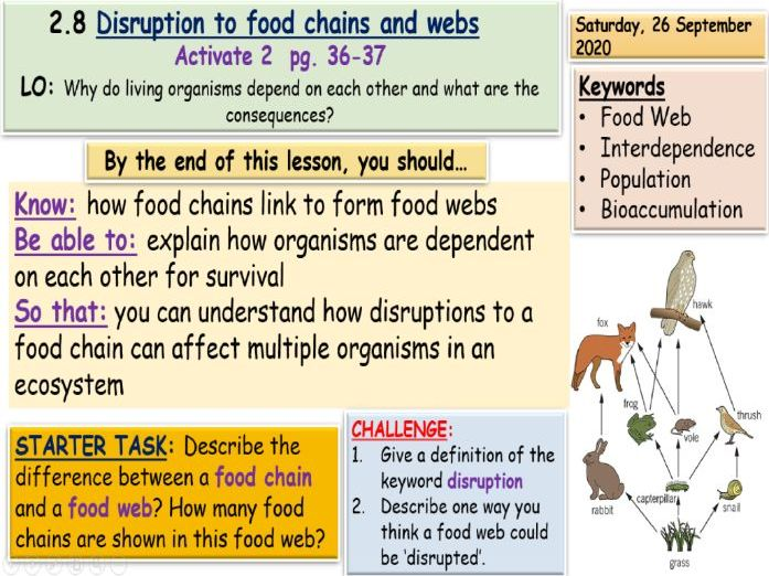 Disruption to food chains and webs KS3 Science