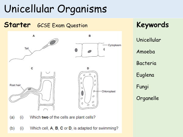 KS3 Cells - Lesson 6 - Unicellular Organisms