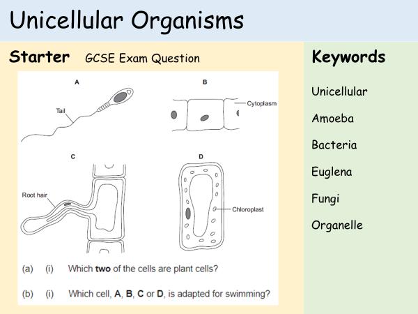 Teaching cells ks3