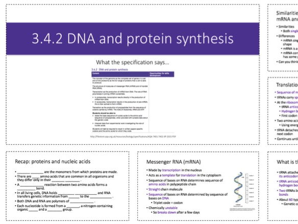 NEW SPEC AS Biology (AQA) LESSON: 3.4.2 DNA and protein synthesis