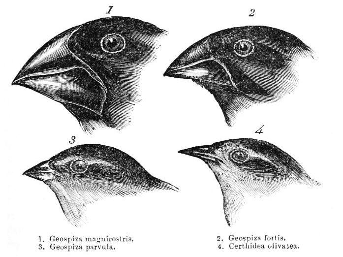 Theories of Evolution [NEW SPEC AQA]