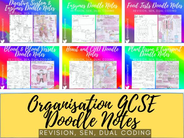 Organisation GCSE Biology Doodle Notes