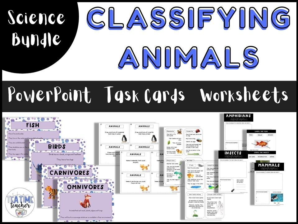 Animals including Humans Classifying Animals Year 1 Bundle