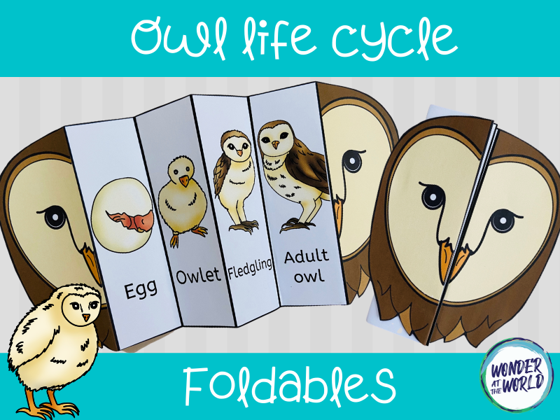 Life cycle of an owl foldable