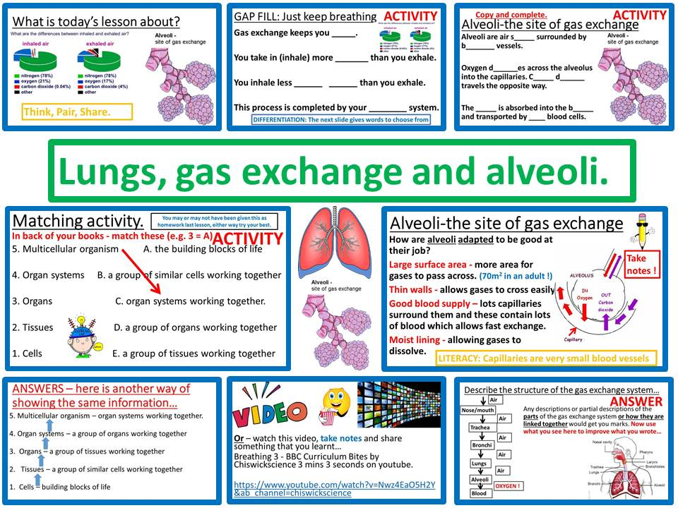 Lungs, gas exchange and alveoli