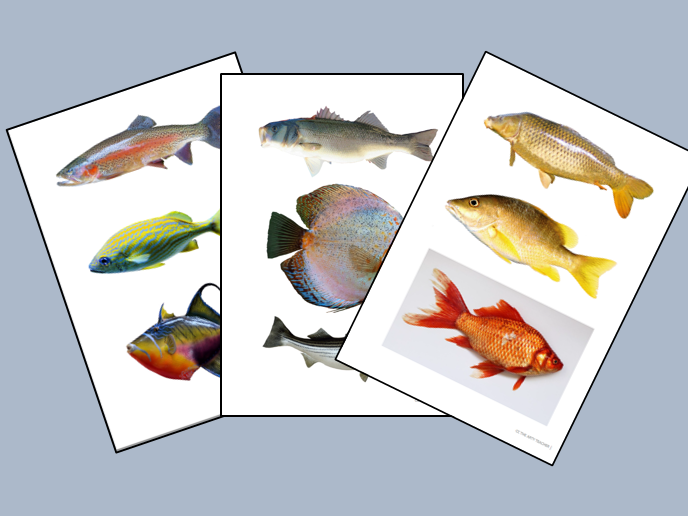 Images of Fish for Drawing and Painting