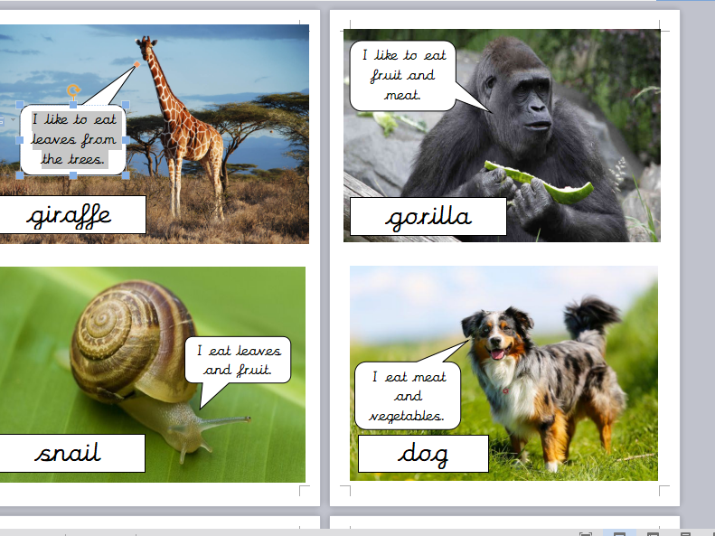 Year One Herbivores, Carnivores, Omnivores Class Activity and Worksheets