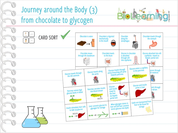 Journey around the body (3): from chocolate to glycogen - Card sort (KS3/KS4)