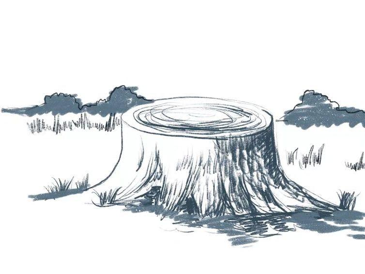 The Poplar-Field Study Bundle