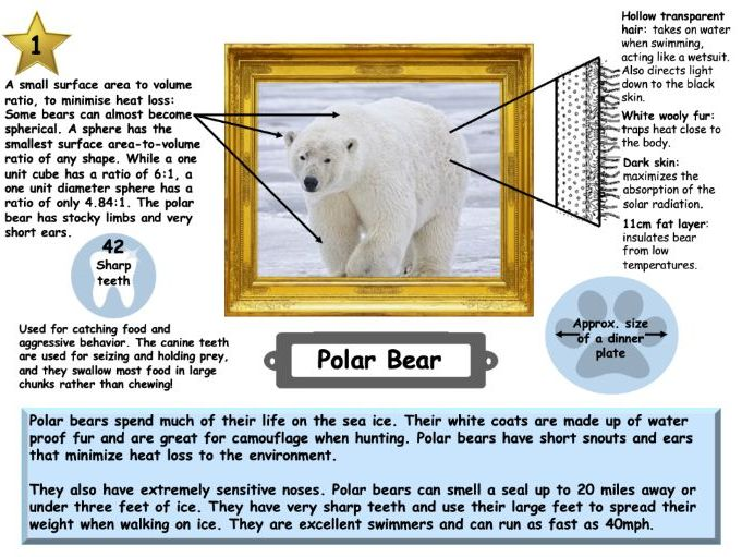 Cold environments animal adaptation fact file