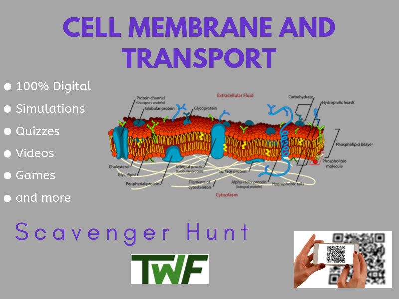 Cell Membrane and Transport Scavenger Hunt