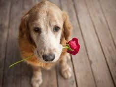 Love's Dog by Jen Hadfield (Relationship Poetry)